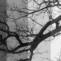 Mackenzie Randall, Old Tree 2013