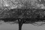 Mackenzie Randall, Small Tree 2013